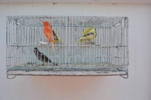 Jaulas Para Crias De Canarios. Con Divisiones De 47x23x23 Cm