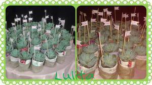 Suculentas Cactus Plantas -souvenir-