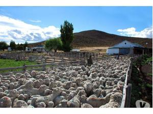 Campo en chubut,  ha, ovinos, agua, peces, petróleo.