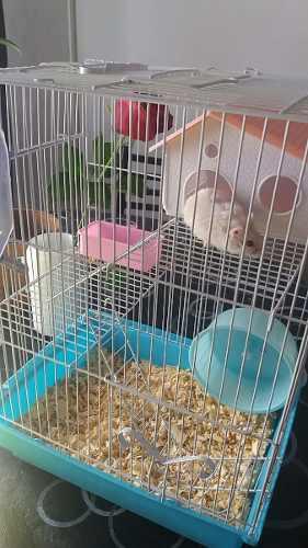 Hamster Topo Ruso Con Jaula