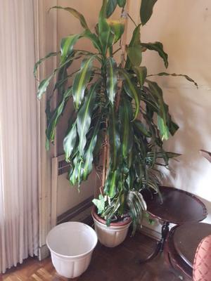 Macetas de ceramica (dos) 1 con planta