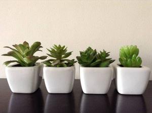 Cactus Y Suculentas Artificiales En Maceta De Cerámica