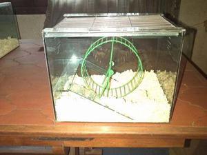 Hamstera Simple Con Tapa Y Rueda Importada En Flores Cap Fed