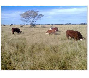 Vendo-Arrendo campo 530ha Ganadero-Mixto (Santa Fe)