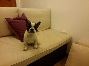 Hembra bulldog francés con fca y libreta sanitaria