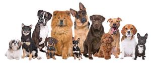 Paseo Perros en Recoleta