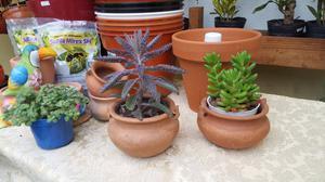 Macetas Souvenirs y centros de mesa con suculentas o cactus