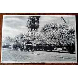 antigua postal motivos de la zafra tucuman costumbres del
