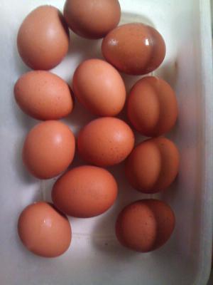 huevos frescos caseros