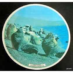 antiguo plato plastico lobos marinos puerto madryn ind arg