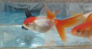 Criadero de peces acuariomar posot class for Criaderos de peces de agua fria
