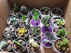 Cactus y crasas 5x$100 Souvenirs, otros