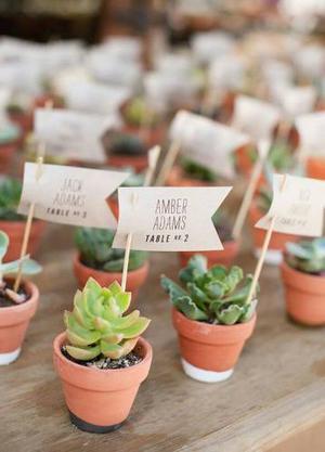 Mini Cactus,suculentas,souvenires Entrega Rápida