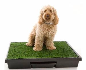 Alfombra Sanitaria De Pasto Para Perros Y Gatos Envío