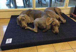 Colchón Para Perros Ideal Adultos (70cm X 100cm X 6cm)