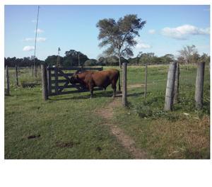 Venta Campo Has en Machagai Chaco
