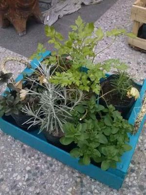 Plantas kokedamas aromaticas interior posot class for Plantas aromaticas de interior