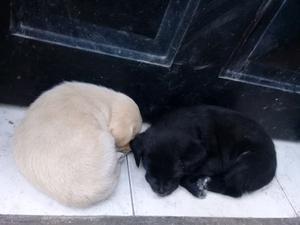 Regalo dos cachorritos