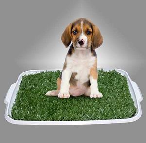 Alfombra Sanitaria De Pasto Para Perros Y Gatos **oferta**