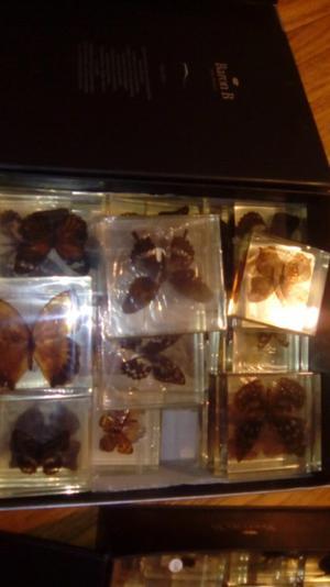 Coleccion de insectos y mariposas