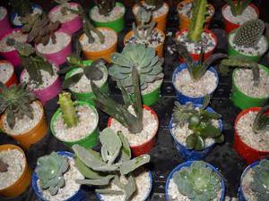 Cactus Y Crasas