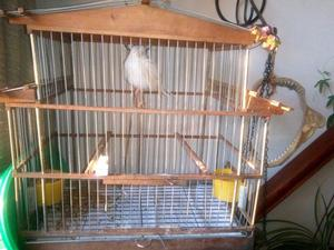 Canario con jaula de madera