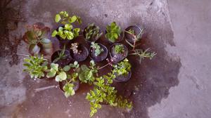 Plantas kokedamas aromaticas interior posot class for Plantas para interior y exterior