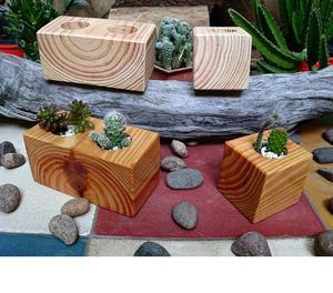 Macetas de madera maciza para cactus y suculentas
