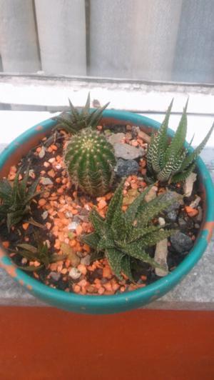 Hermosa variedad de cactus
