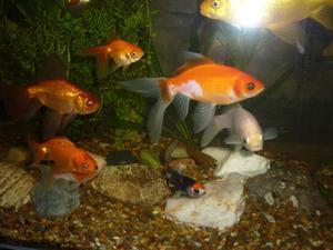 100 peces variados de agua fría a  N°2 de 4 cm