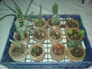 plantas en macetas de ceramica