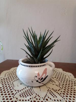 Macetas de ceramica con planta...