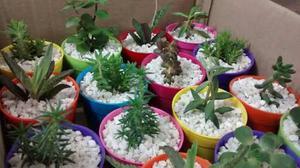 Mini Cactus Y Suculentas Ideal Dia De La Madre Souvenirs