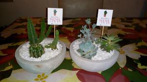 Macetas con cactus y suculentas varios modelos.