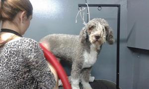 Curso de peluqueria canina en cordoba capital