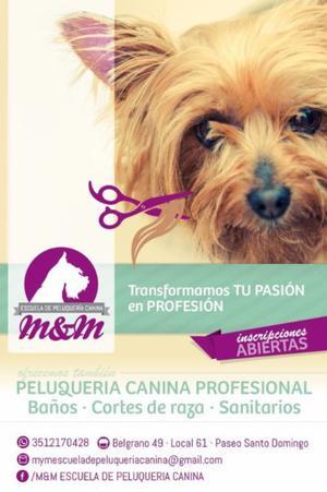 Curso de peluqueria canina