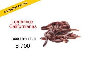 Lombrices Californianas para criadero