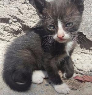Regalo gatos de 1 mes de vida posot class - Gatitos de un mes ...