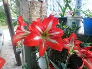 Tutores Para Plantas Y Para Decorar El Jardin Balcones
