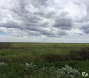 Campo Cercano a Bahía Blanca