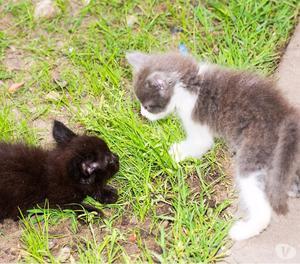 Regalo dos gatitos