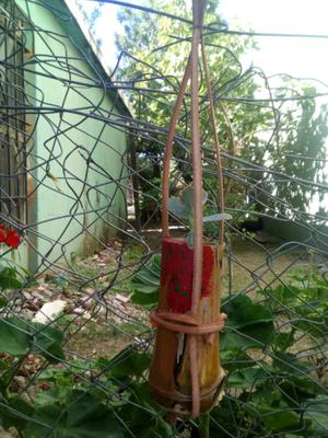 Vendo mcetitas de caña. Lindo para decorar tu jardín.
