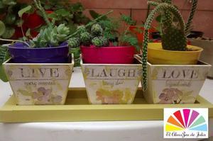 Macetas cactus, suculentas $200