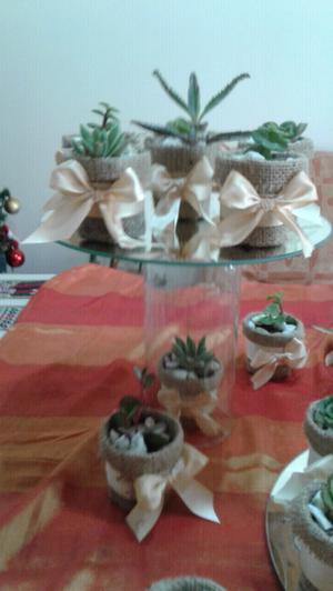 macetas con plantas para souvenirs