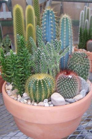 Vendo cactus y crasas ideal para regalar