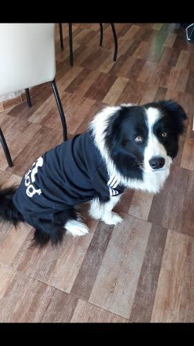 Buzo Con Capucha Para Perros Adi...dog. 8xlnegro