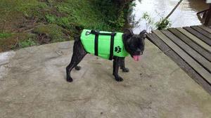 Salvavidas, Chaleco, Aquatic Para Perros De 3 A 5kg T 1
