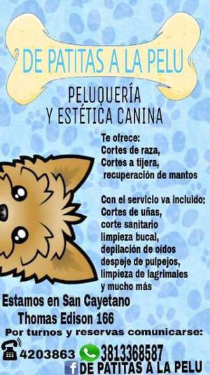 Peluquería y Estética canina