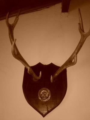 Cornamenta de Ciervo con aplique de cobre