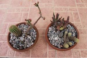Mix De Cactus En Macetas De Barro